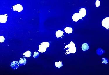 海悦天地海底世界3.png